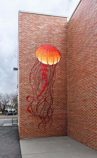 Untitled (several different colored jellyfish)