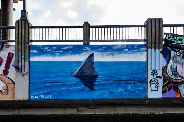 Untitled (shark's fin)