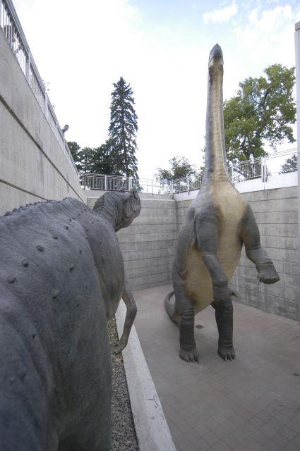 Camarasaurus and Ceratosaurus