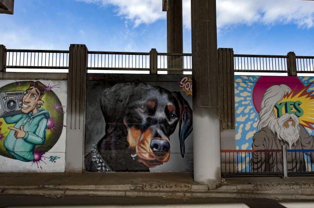 Untitled (a Doberman Pinscher dog's face)